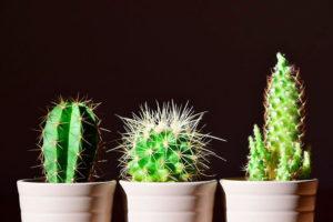 Cactus inspire designers