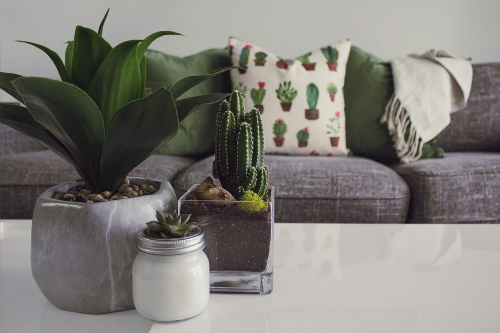Enjoy Succulents for a Unique Touch